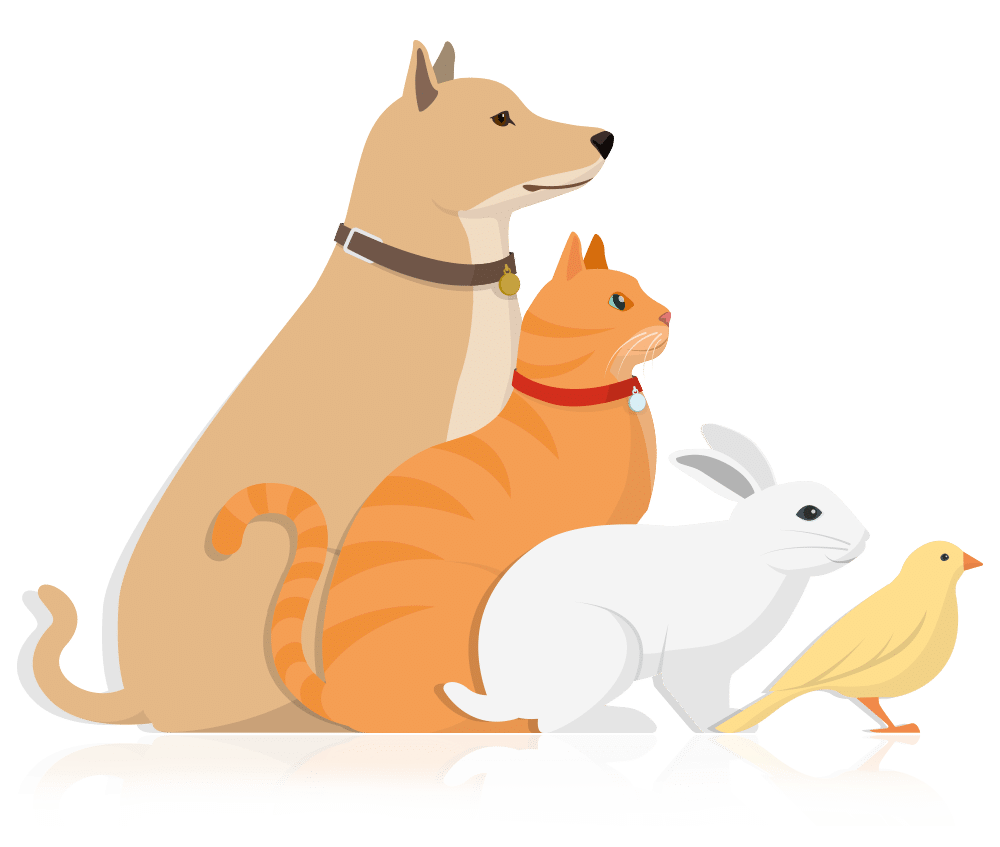 Animals lineup vector image